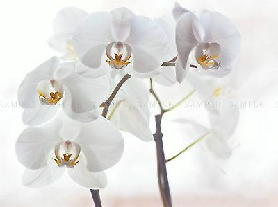 SPANISH WALL FLOWERS PHOTO ART PRINT POSTER PICTURE BMP193A