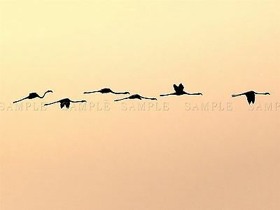 GEESE BIRD FORMATION SUNSET LAKE BLACK FRAME FRAMED ART PRINT PICTURE B12X9084