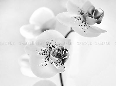 WHITE FLOWER PETALS BLOOM BLACK PHOTO ART PRINT POSTER PICTURE BMP1368A