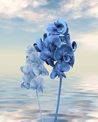Blue and White Flowers Seascape Wall Art Photo Print Coastal Home Decor Ocean