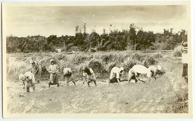 c1920 China or Indochina women working in rice paddy Real Photo