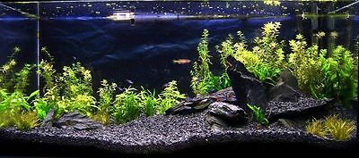 Natural Black Basalt Gravel Substrate For Aquarium Fish Tank   25kg   2-5mm