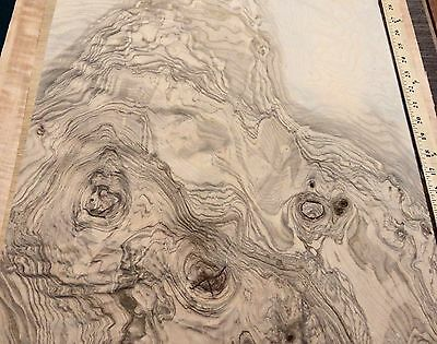 "Olive Ash Burl wood veneer 20"" x 21"" with paper backer ""AAA"" grade (20 mil back)"