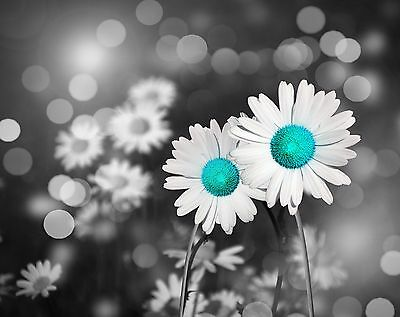 Teal Gray Room Wall Art Photo Print Home Decor Floral Daisy Bedroom Bathroom Pic