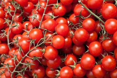 Tomato Vegetable seeds Red Cherry from Ukraine
