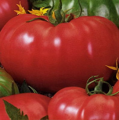 Tomato Seeds Favorit Ukraine Heirloom Vegetable Seeds