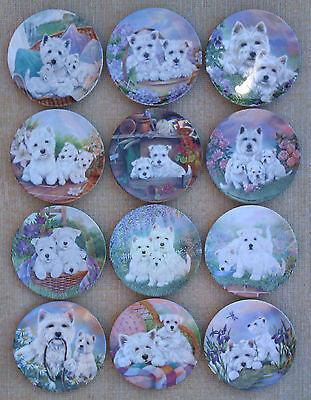 Royal Worcester - The Westie Family Set Of 12 Plates. Rare