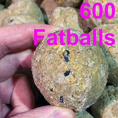 600 x Suet Fatballs Netless Wild Bird Food High Energy Contains Black Sunflower