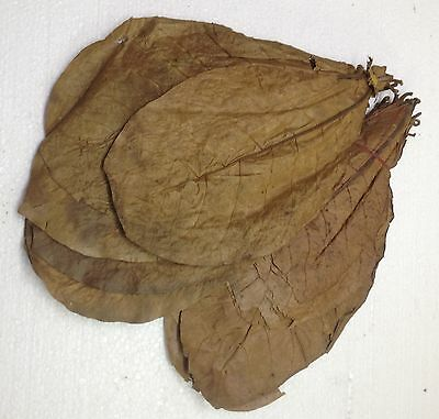 0,7 Kg PREMIUM INDIAN ALMOND CATAPPA LEAVES discus, shrimps ✈Free Shipping✈