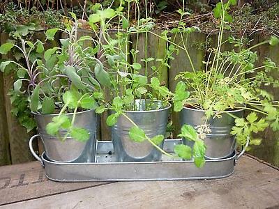 Set Of Three 3 Metal Garden Herb Plant Flower Pots On Vintage Zinc Tray
