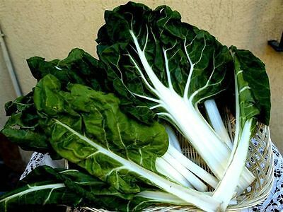 Swiss Chard Seeds Winter Vegetable Seeds from Ukraine early