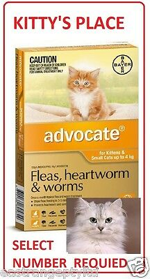Advocate For Small Cats Up To 4kg