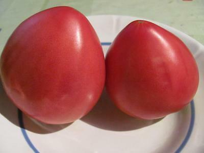 Tomato Seeds Budenovka pink Ukraine Heirloom Vegetable Seeds