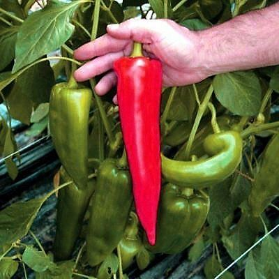 Sweet Pepper seeds Red Horn Ukraine Heirloom Vegetable Seeds / 50 seeds