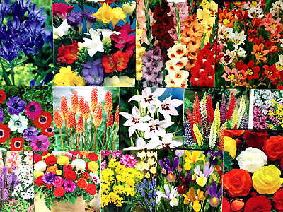 Mixed Beautiful Garden Flowers Bulbs Spring Summer Perennial Plant-Quality Pack