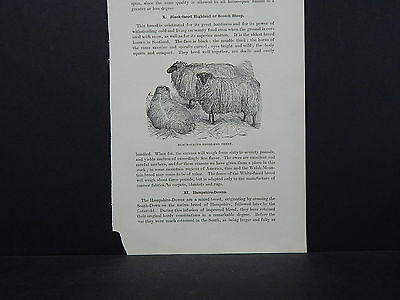 Sheep ONE In-Text Engraving Double Sided 1860s - 1880s #06 Black-Faced Highland