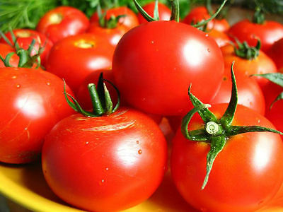 Tomato Seeds Irishka Ukraine Heirloom Vegetable Seeds