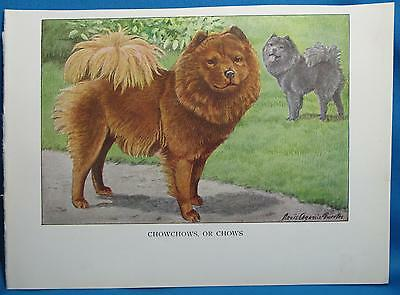 Vintage ChowChow or Chows Dog Print Fuertes Natl Geographic Book of Dogs 1927