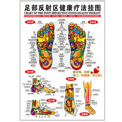 5X Chinese Acupuncture Foot Reflective Zone Massage Reflexology Chart Poster Map