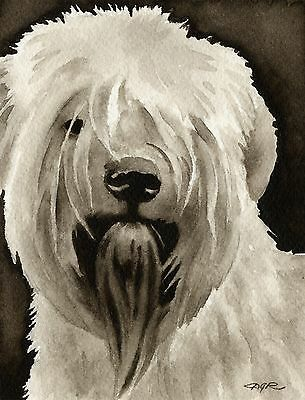 SOFT COATED WHEATEN TERRIER note cards by watercolor artist DJ Rogers