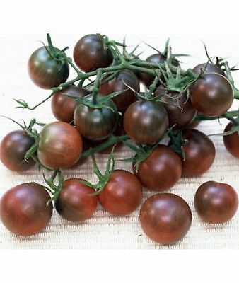 Tomato Seeds Black Cherry Ukraine Heirloom Vegetable Seeds