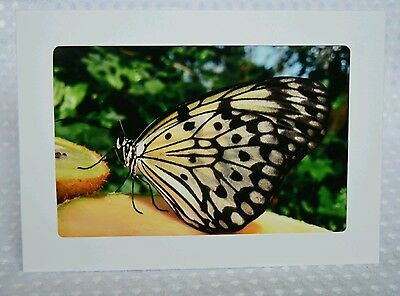 Butterfly1, greeting card, blank inside, photography print, framable, Artslovely