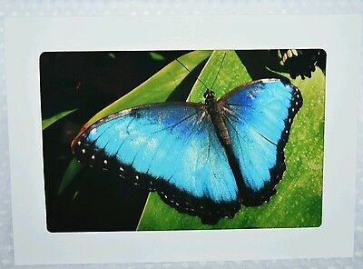Butterfly3, greeting card, blank inside, photography print, framable, Artslovely