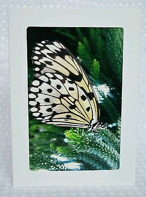Butterfly2, greeting card, blank inside, photography print, framable, Artslovely