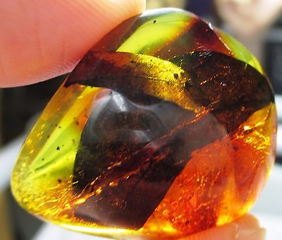 Two leaves in Dominican amber fossil