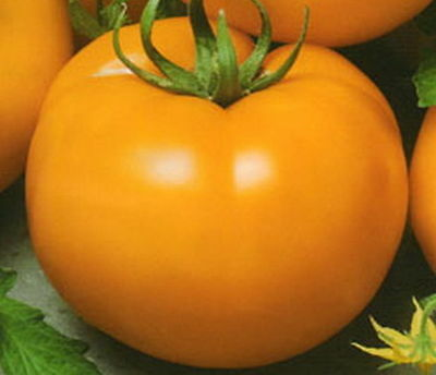 Tomato Seeds Ozharovsky Gold Ukraine Heirloom Vegetable Seeds / 60 seeds