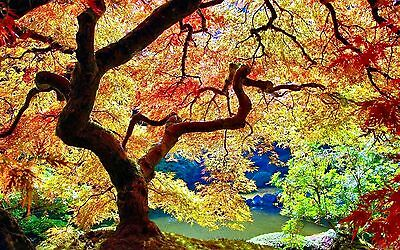 STUNNING COLOURFUL AUTUMN TREE LANDSCAPE Large Wall Canvas Print 20x30 Inch