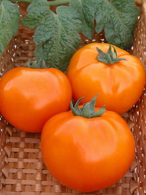 Tomato Seeds Orange Ukraine Heirloom Vegetable Seeds from Ukraine