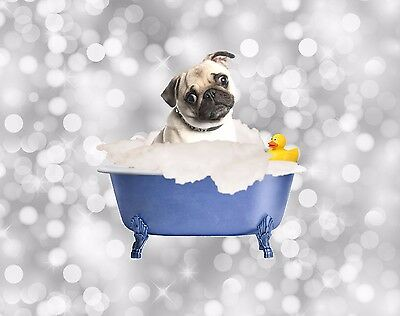 Blue Gray Brown Home Decor Pug Dog Wall Art Bath Tub Photo Print Matted Picture