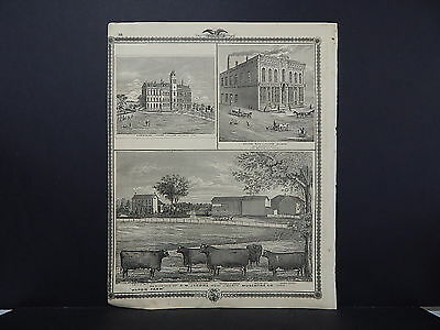 Iowa, 1875, Map, Cows, Muscatine County, Luther College, Single Sided M3#02