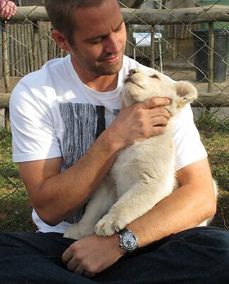 Paul Walker UNSIGNED photo - B974 - With lion cub