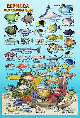 "Franko Bermuda Reef Creatures Guide Laminated Fish Identification Card 4"" x 6"""