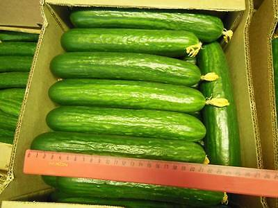 Cucumber Seeds Cuckoo F1 ( for greenhouses)  Vegetable seeds. 15 SEEDS