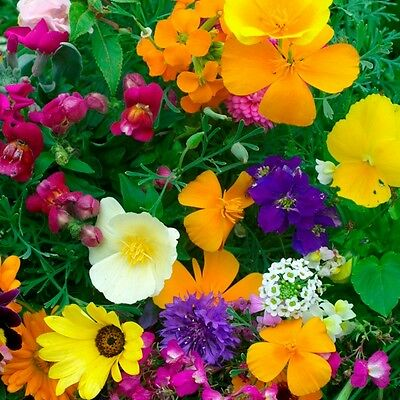 Pack Flower Seed Dwarf Hardy Annuals Mixed King's Quality Seeds