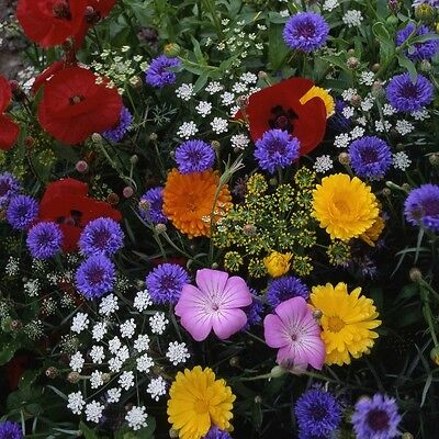 Pack Flower Seed Hardy Annual Tall Cut Flower Mix King's Quality Seeds