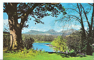 Scotland Postcard - The River Tweed from Dryburgh - Berwickshire    XX326