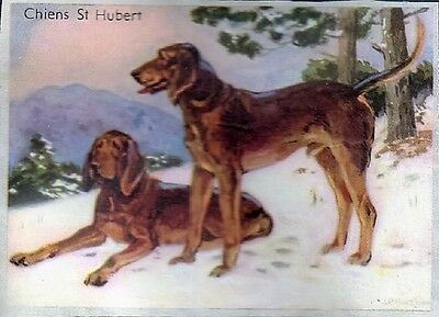 Rare French Trade Card Bloodhound Dog 1954
