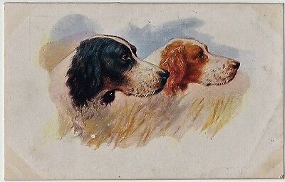 English & Red & White Setter Dogs Art Postcard 1937