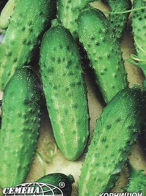 Cucumber Seeds Anulka F1 Vegetable seeds from Ukraine. gherkin