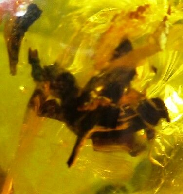 Nice flower in Dominican amber fossil