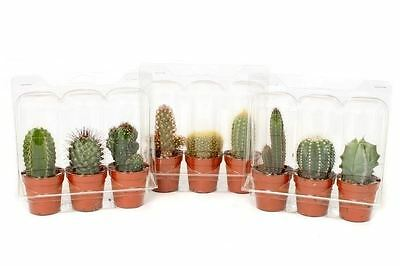 Cacti Plant Collection.  3 Plants each in a 5.5cm Pot.
