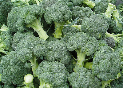 Cabbage seeds broccoli Calabrese from Ukraine