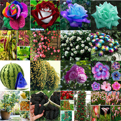 Hot Colorful Exotic Hydrangea Orchid Ideal Garden Potted Seeds Rare Flower Plant