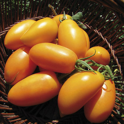 Tomato Seeds Golden banana Heirloom Vegetable Seeds / average early