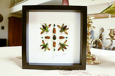 Taxidermy -High end Art frame with real insects signed by artist Artistic 7