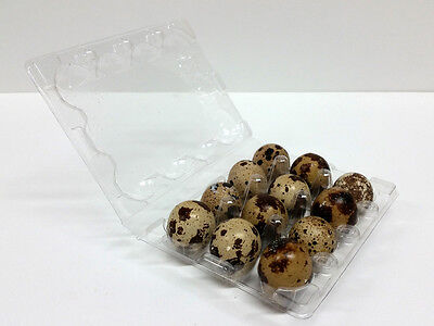 Quail Egg Cartons - 50pcs - FREE SHIPPING!